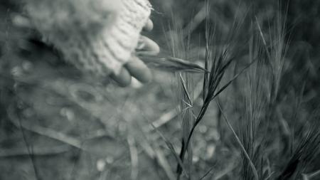 子供の手に触れる黒と白の草 写真素材