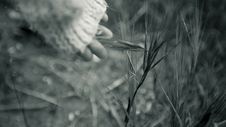 frailty: Childs hand touches grass in black and white Stock Photo