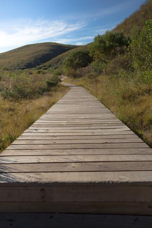 ブッシュを介して木製の通路