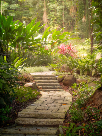 Rocky path leading through a green jungle in the Seychelles