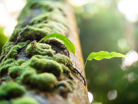Low angle depth of field close up shot of a moss covered tree trunk in the Seychelles Stock Photo