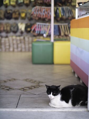 Black and white Cat waits in the enterance to a store Standard-Bild