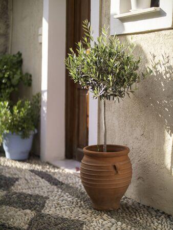 Olive tree in red clay pot by a door in Greece Standard-Bild