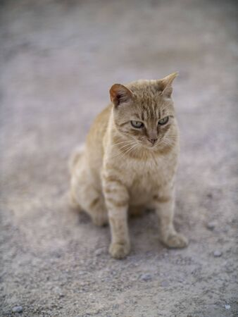 Small tabby street cat in the dust