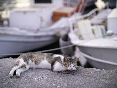 sleeping street cat on a dock in Greece