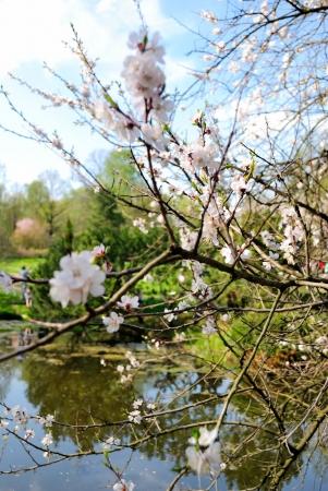 giardino fiorito foto royalty free, immagini, immagini e archivi ... - Giardino Fiorito Disegno