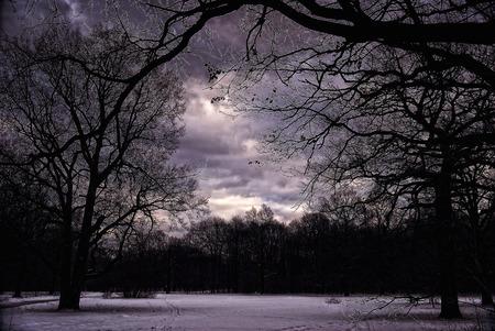 barren: Darkness. Dramatic Dark Sky with Winter Barren Trees