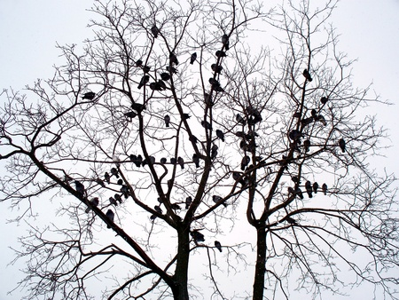 A lot of doves sit on branches on a tree by sky background