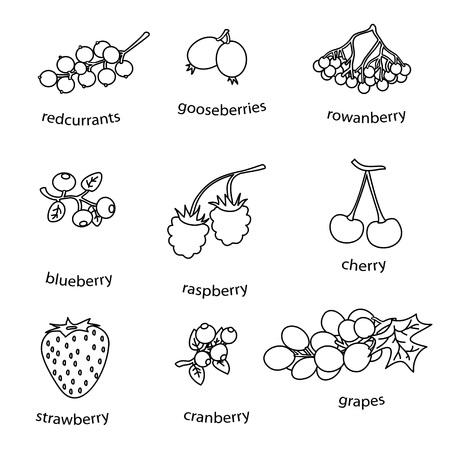 drow: monoline berries set on white background simple vector eps 10 Illustration