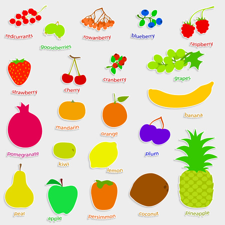 berry: set handdrow fruits and berries, vector