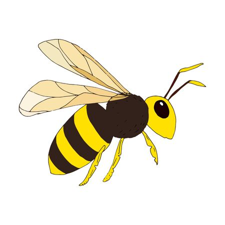 Wasp on white background. Vector illustration