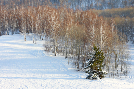 winter slope with the trees