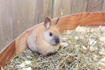 pretty cute little pink rabbit