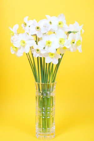 white narcissus flowers in the vase on the yellow background