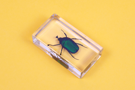 green cockchafer inside the plastic case