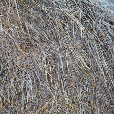 dry grey hay for horses