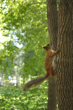 cute little squirrel in the park