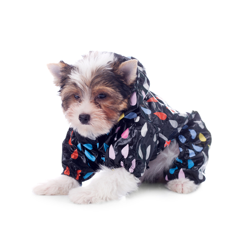cute little puppy wearing clothing