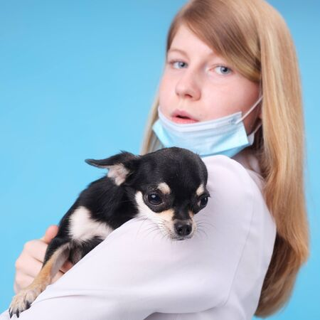 pretty young veterinarian with the little dog, focus on the dog