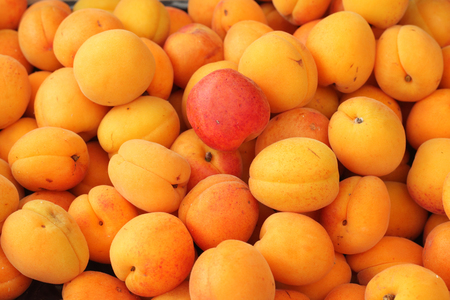 bright apricots in the market