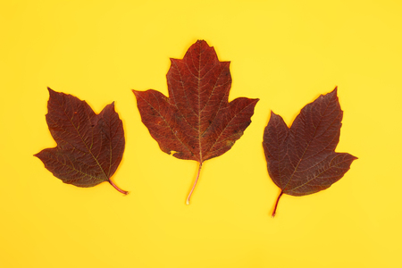 red bright maple leaves closeup Stock Photo