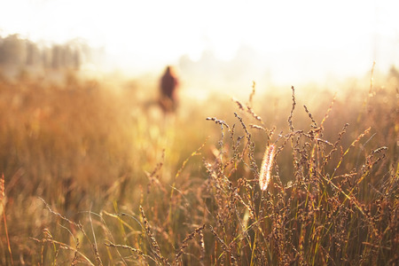 grasses with some one in blurred background