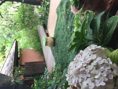 Flower in the garden Фото со стока