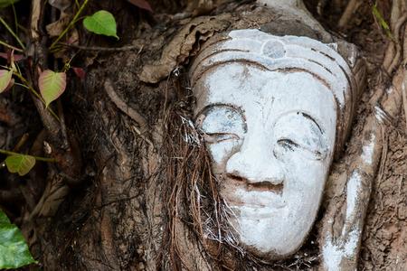 cabeza de buda: la cabeza de Buda en el �rbol, wat de laos
