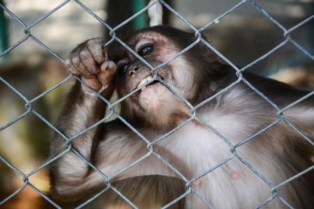 sciureus: Monkey in a Cage,Not Freedom