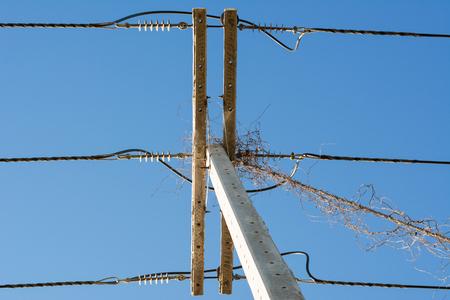 high voltage current: Light poles have vine