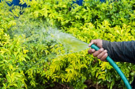 dewdrop: Working watering garden from hose,Golden dewdrop background