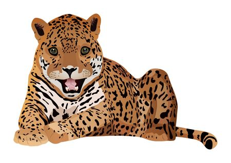 Cute cartoon tiger isolated on a white background. Vector illustration.