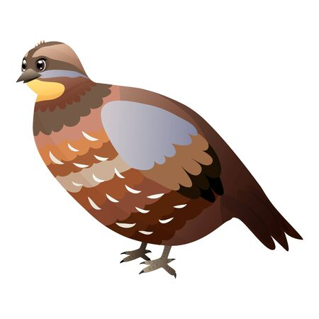 Cute cartoon quail isolated on a white background. Flat style. Ilustração