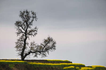 Tree in the nature 版權商用圖片