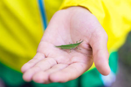 Grasshopper on persons hand
