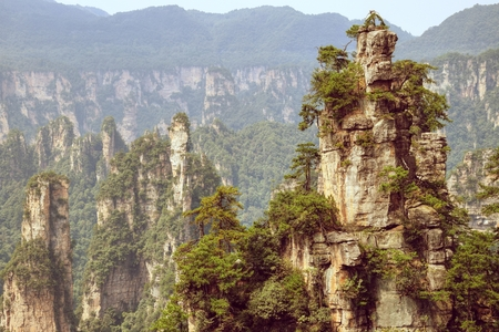 """Zhangjiajie the """"Avatar"""" mountain in Hunan Province in China. Thousand and thousand rock soar to skyward. The evergreen pine trees struggle on the top of the hills."""