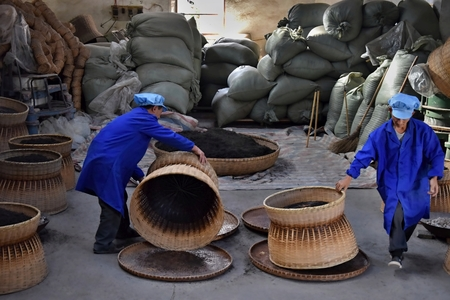 ANHUI PROVINCE, CHINA - CIRCA OCTOBER 2017: Two men working inside a tea factory with the big wicker baskets, where the famous black tea Liu An drying. 報道画像