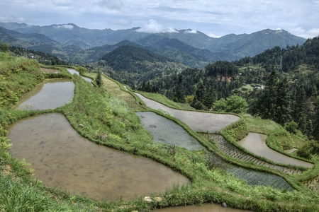 The terraced rice fields on the slope of mountains in Guizhou province in China. Traditional floating rice system use at cascaded paddies. 版權商用圖片