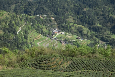 Tea plantation mountains in  Guizhou province in China.
