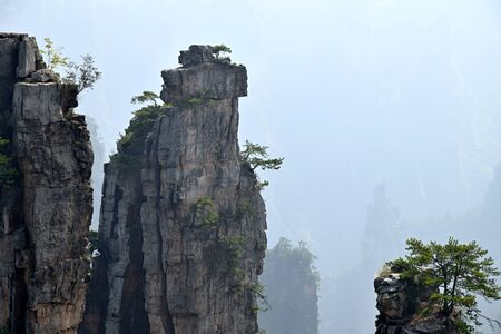 Zhangjiajie the mountains in Hunan province in China. Thousand and thousand rock soar to skyward. The evergreen pine trees struggle on the top of the hills.