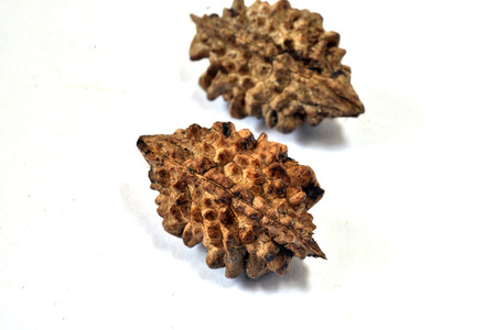 seed: Tree seed