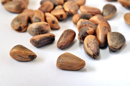 pine nut: pine nut