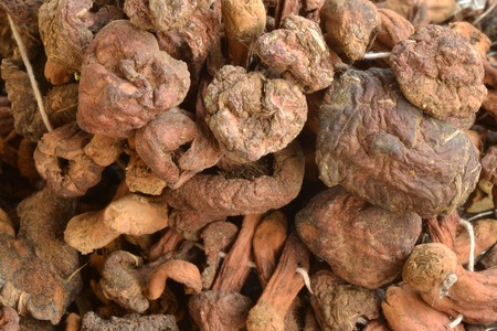 legumbres secas: Dried mushrooms