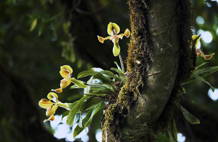 yellow: Yellow Orchid Stock Photo