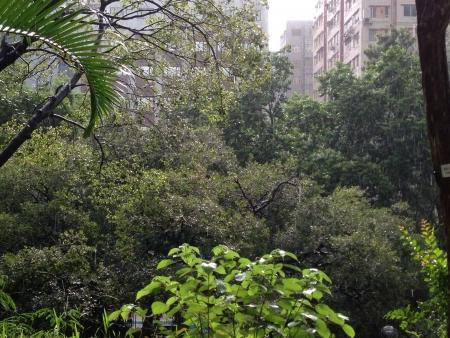 hk: Rain in HK