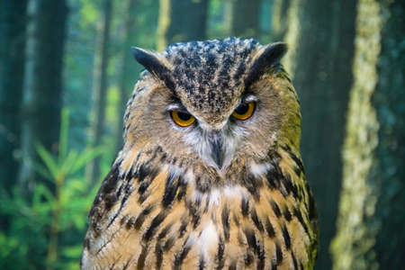owl on a branch indoors