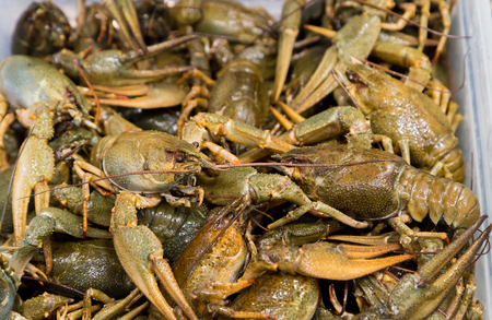 Live crayfish on the counter market. Stock Photo