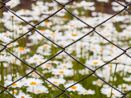 Mesh netting. Daisy flowers in the background in the blur. Stock Photo