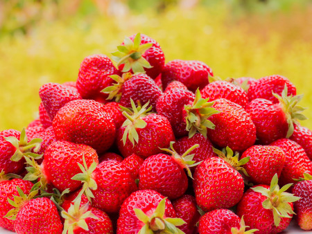 vitamine: The harvest of the strawberry. Lots of red berries. Blurred green and yellow background Stock Photo