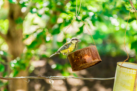 The bird pecks seeds from the feeders. Feeder out of a tin can. Titmouse.